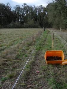 SINE Rhizome Planting at E4 1 10Nov2010