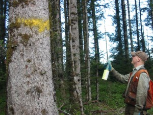 IRM forester tree marking per forest management plan prescription for selective timber harvesting.