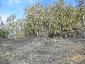 Oak woodlands after prescribed burn