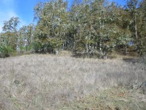 Oak woodlands before prescribed burn