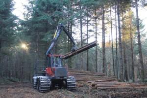 Thinning young Douglas-fir